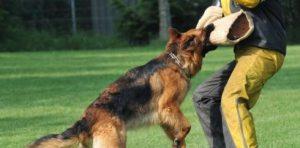 Anjing Penjaga